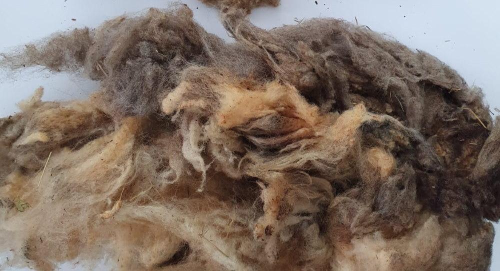 wool pellet mill